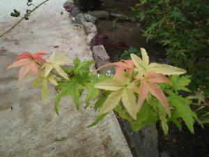 2010_0917kodukuearea0024