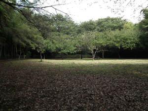 2010_0917kodukuearea0048