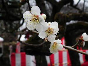 2011_0220okurayamapark0020