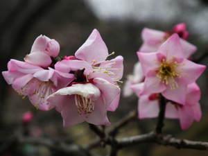 2011_0220okurayamapark0029