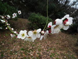 2011_0220okurayamapark0049