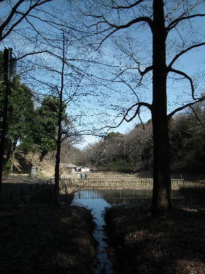 2011_0225shikinomori0004