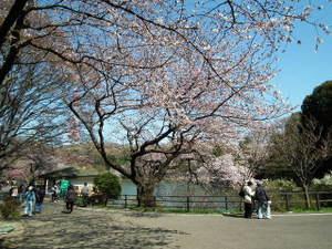 2011_0406mitsuikepark20110001