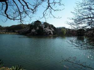 2011_0406mitsuikepark20110023