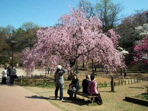 2011_0406mitsuikepark20110012